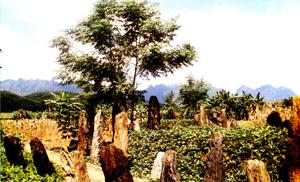 """Nhiều hòn mồ trong khu mộ cổ Đống Thếch, xã Vĩnh Đồng (Kim Bôi) còn lưu giữ nhiều tư liệu về tục """"ma khô"""" của người Mường Hòa Bình (ảnh:T.L)"""